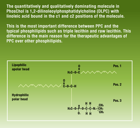 Diagram depicting the main reason for the therapeutic advantages of PPC over other phosphilipids.